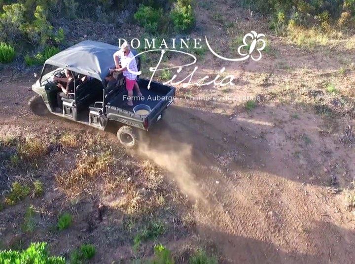 domaine de piscia corse activites randonnees buggys